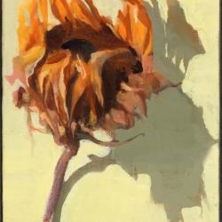 Dried-Sunflower