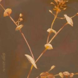 River-Weeds